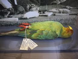dead-parrot